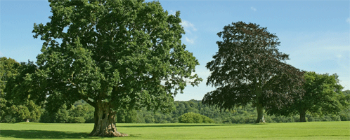 Tree Care Service and Spraying
