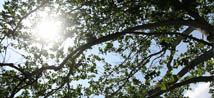 Tree Spraying Services