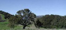 Sudden Oak Death Treatment